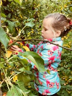 Appels plukken is serieus werk :-)