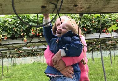 Myrthe helpt Wessel met aardbeien plukken